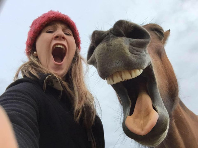 "Georgie Bain takes a selfie with her horse in ""Best Friends"" in Aberdeen, United Kingdom, Date Unknown. (Photo by Georgie Bain/Barcroft Images/Comedy Pet Photography Awards)"