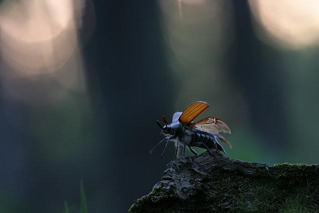 Photo by Vadim Trunov