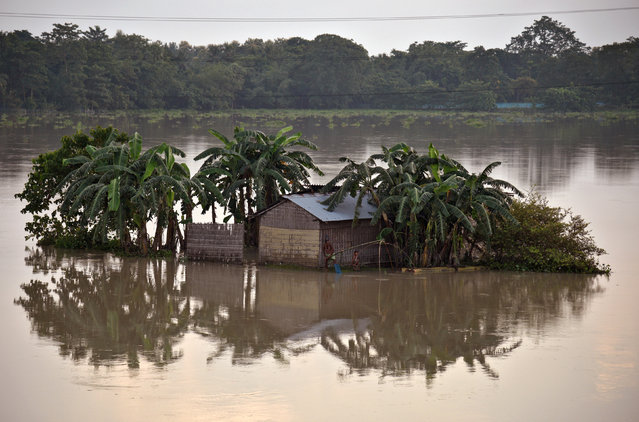 A man casts his fishing net in the flood waters next to his partially submerged hut in Morigaon district in the northeastern state of Assam, India, August 17, 2017. (Photo by Anuwar Hazarika/Reuters)