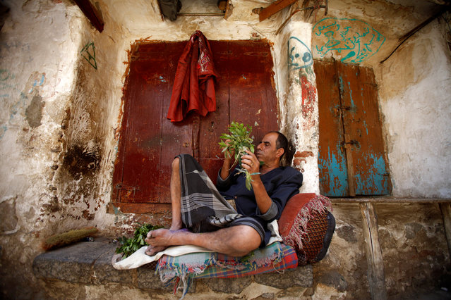 A man chews qat, a mild stimulant, as he sits in the old quarter of Yemen's capital Sanaa, September 17, 2016. (Photo by Mohamed al-Sayaghi/Reuters)