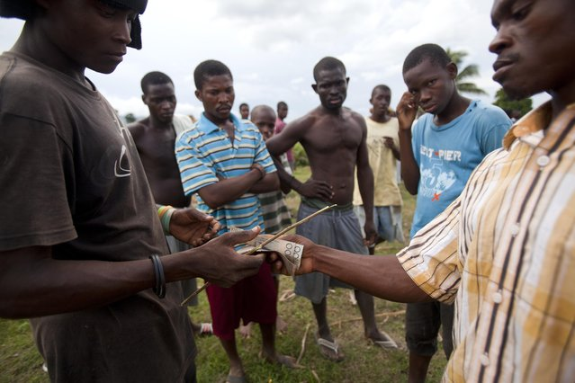 In this November 9, 2014 photo, men make bets on bulls before a fight in Leogane, Haiti. For people living on less than $2 dollars a day, the chance for a big payday is appealing. Pots can grow to 36,000 Haitian gourdes ($775). Bettors say choosing a winner often involves spiritual visions. (Photo by Dieu Nalio Chery/AP Photo)