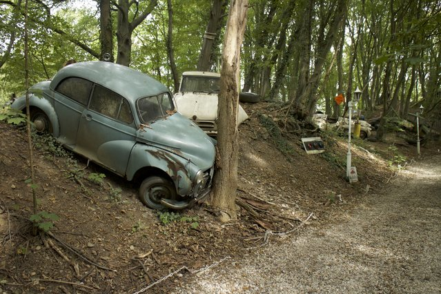 An old vintage car broken down and crashed into a tree on purpose by Michael in his rotting forest in Neandertal Germany, September 11, 2016. (Photo by Christoph Hagen/Barcroft Images)