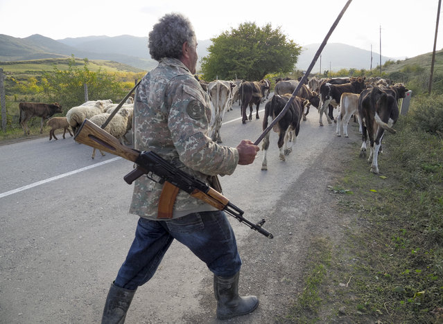 Shepherd Kim Mkrtchian armed with a Kalashnikov drives cows and sheep away from the front line near the town of Martuni, the separatist region of Nagorno-Karabakh, Friday, October 23, 2020. Heavy fighting over Nagorno-Karabakh is continuing with Armenia and Azerbaijan trading blame for new attacks. Two Russia-brokered cease-fires collapsed instantly after taking effect, and the warring parties have continued to exchange blows with heavy artillery, rockets and drones. (Photo by AP Photo/Stringer)