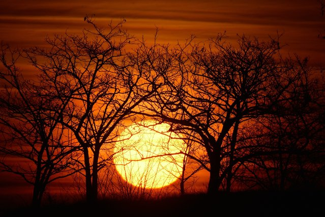 Some trees are silhouetted in front of the rising sun over the horizon in Hajdusamson, 232 kilometers east of Budapest, on January 13, 2015 morning. (Photo by Zsolt Czegledi/EPA)