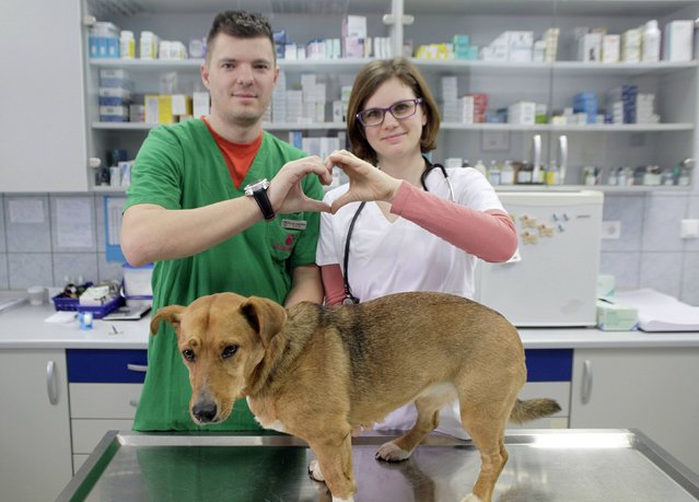 Veterinarians Klavdij and Urska Kasenburger make a heart-shaped gesture at a veterinary clinic in Sentjur pri Celju February 10, 2015. (Photo by Srdjan Zivulovic/Reuters)