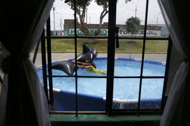 In this Sunday, February 15, 2015 photo, a boy plays with an inflatable shark in a pool in front of his home in Callao, Peru. The heat in and around Peru's sprawling capital can be intense in February, the heart of the Southern Hemisphere's summer, and residents of its poor neighborhoods are cooling themselves by setting up plastic pools on the street in front of their homes. (Photo by Martin Mejia/AP Photo)