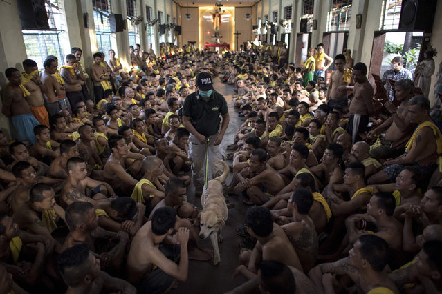 Inmates sit on the floor of Saint Dimas chapel as Philippine Drug Enforcement Agency personnel with a K9 dog look for contraband among inmates at the Manila City Jail on September 29, 2018, during an anti-drug and contraband inspection codenamed Oplan Greyhound. The inmates were temporarily held in the chapel as jail personnel inspect their cells during the operation, which is a regular inspection conducted with the Philippine Drug Enforcement Authority (PDEA) and the Bureau of Jail Management and Penology at the jail. (Photo by Noel Celis/AFP Photo)