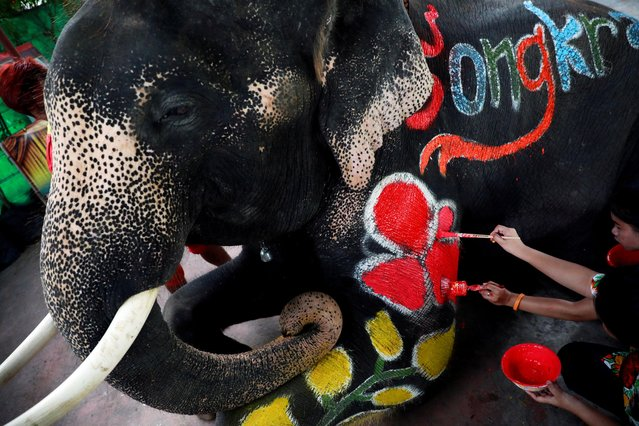 Mahouts paint an elephant ahead of celebrations for the water festival of Songkran in Ayutthaya, Thailand on April 11, 2019. (Photo by Soe Zeya Tun/Reuters)