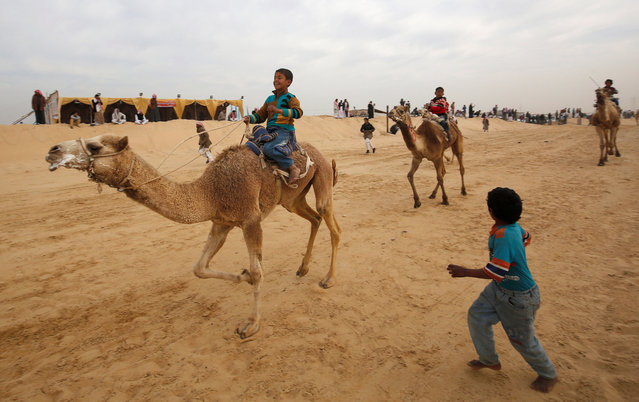 Jockeys, most of whom are children, compete on their mounts during the opening of the International Camel Racing festival at the Sarabium desert in Ismailia, Egypt, March 21, 2017. (Photo by Amr Abdallah Dalsh/Reuters)