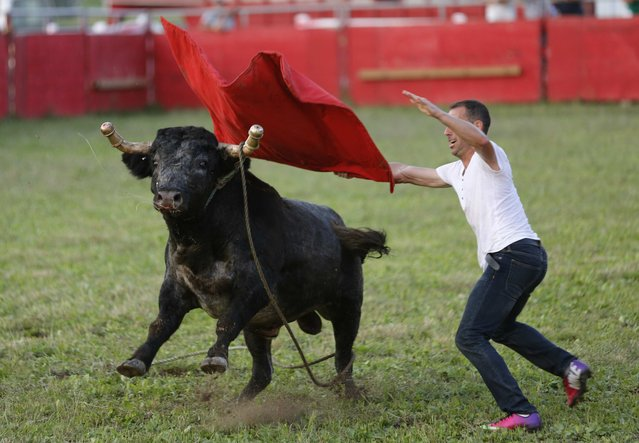 "Matador Marco Espinola, who emigrated from the Azores two years ago, challenges a bull during an Azorean ""tourada a corda"" (bullfight by rope) in Brampton, Ontario August 15, 2015. (Photo by Chris Helgren/Reuters)"