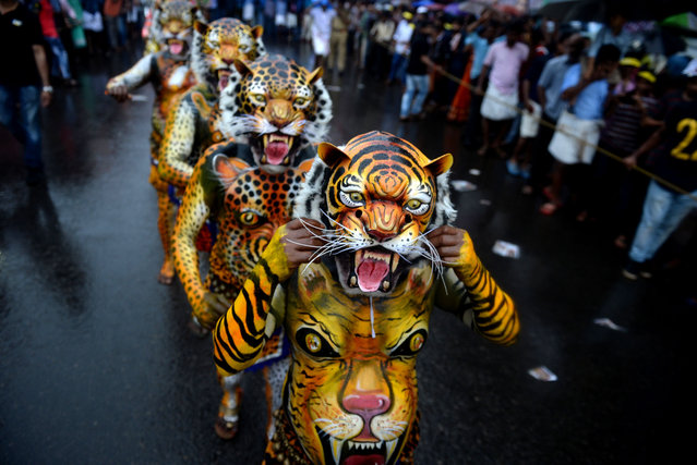 """Indian performers painted as tigers take part in the """"Pulikali"""", or Tiger dance, in Thrissur on September 7, 2017. The folk- art event is held every year in the town during the """"Onam"""" festival. (Photo by Arun Sankar/AFP Photo)"""