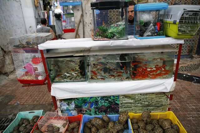 A man sells fish and turtles in Medina, Rabat's old city September 23, 2014. (Photo by Damir Sagolj/Reuters)