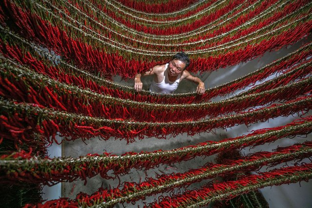 A villager dries chillies on September 1, 2020 in Bijie, Guizhou Province of China. (Photo by VCG/VCG via Getty Images)