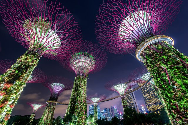 Awe-inspiring vertical gardens illuminate the night sky at the Supertree Grove in Singapore. (Photo by BigBoom/Shutterstock)