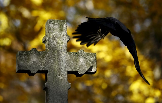 A bird flies near a cross at the Powazki cemetery during All Saints Day in Warsaw, Poland November 1, 2015. (Photo by Kacper Pempel/Reuters)