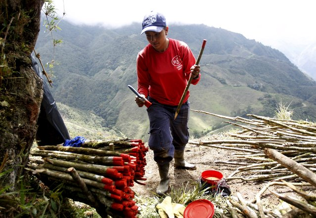 A woman prepares wooden markers in a demining training camp near Sonson in Antioquia province, November 20, 2015. Women's work takes on a nontraditional meaning for fifteen Colombian women who work to rid the Antioquia Mountains of deadly landmines as the country edges closer to a peace agreement with Marxist rebels to end over a decade of conflict which has claimed 220,000 lives. (Photo by Fredy Builes/Reuters)