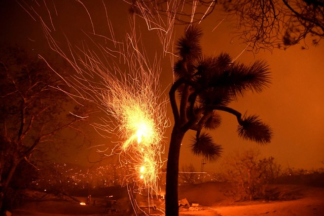 Winds blows flying embers from a burning tree at the Bobcat Fire in Juniper Hills, California, U.S., September 19, 2020. (Photo by Gene Blevins/Reuters)