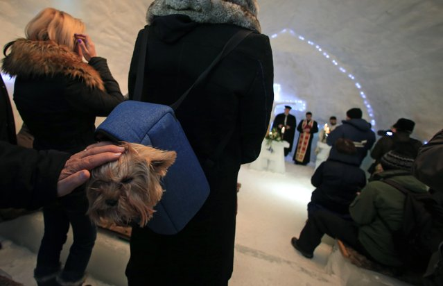 A dog sits in his owner's backpack during the inaugural mass of a church made entirely from ice at Balea Lac resort in the Fagaras mountains January 29, 2015. (Photo by Radu Sigheti/Reuters)
