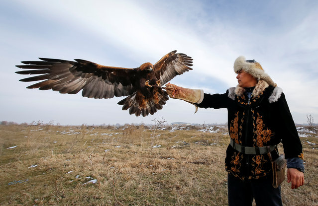 Arman Kushkarov, a hunter with a golden eagle, raises a hand for landing of his tamed bird during training outside of the village of Shamalgan, in Almaty region, Kazakhstan, December 14, 2016. (Photo by Shamil Zhumatov/Reuters)