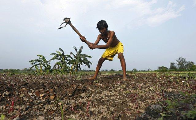 A farmer ploughs a field in Kolkata, India, February 28, 2016. (Photo by Rupak De Chowdhuri/Reuters)