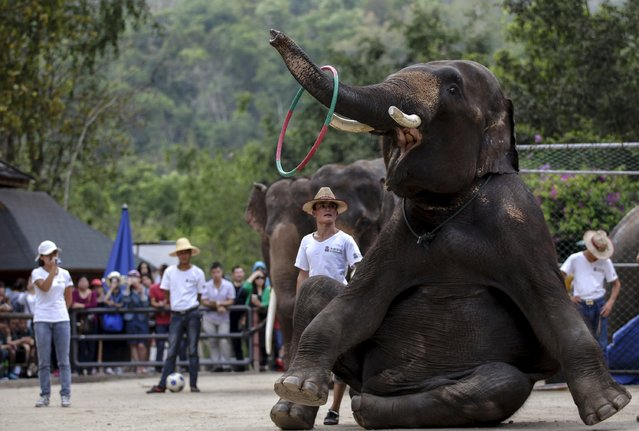 An elephant performs during a show at an elephant training school in Xishuangbanna, Yunnan province, April 18, 2015. (Photo by Wong Campion/Reuters)