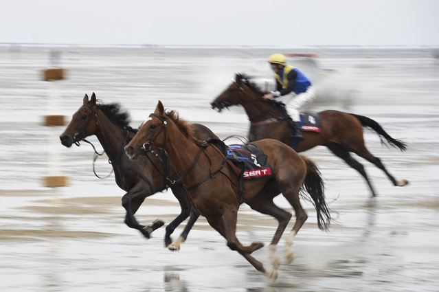 A jockey competes past horses that lost their riders on mud flats during the tideland race (Wadden Race) in Duhnen, Lower Saxony, Germany, July 12, 2015. (Photo by Fabian Bimmer/Reuters)