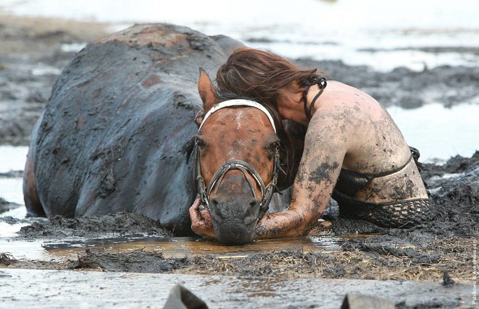 """Astro"" the Horse Gets Stuck in the Mud"