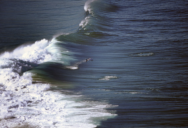 Pod of playful dolphins surfing in waves