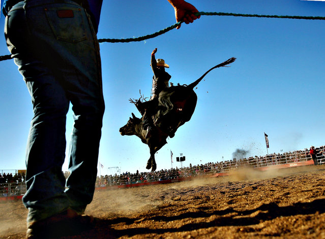 A rider holds on as a bull tries to throw him during the Bull Ride Spectacular on the first day of the 2014 Deni Ute Muster at the Play on the Plains Festival grounds on October 3, 2014 in Deniliquin, Australia. (Photo by Mark Kolbe/Getty Images)