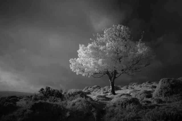 "Spotlight, Devon. Black and White category winner. ""This was my first shot with a full spectrum converted Nikon D3200. This was taken with a 850nm screw-on filter for a nice contrast black and white image. I've since added a few filters to my collection and look forward to creating something quite different with the infrared full spectrum"". (Photo by Neil Burnell/UK Landscape Photographer of the Year 2020)"