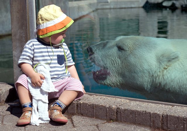 Two year old Laura sits in front of the polar bear enclosure at zoo Wilhelma in Stuttgart, Germany, Friday, Aug. 2, 2013. Temperatures soared to 39 degrees Celsius (102 Fahrenheit) in some parts of Germany. (Photo by Marijan Murat/AP Photo/DPA)