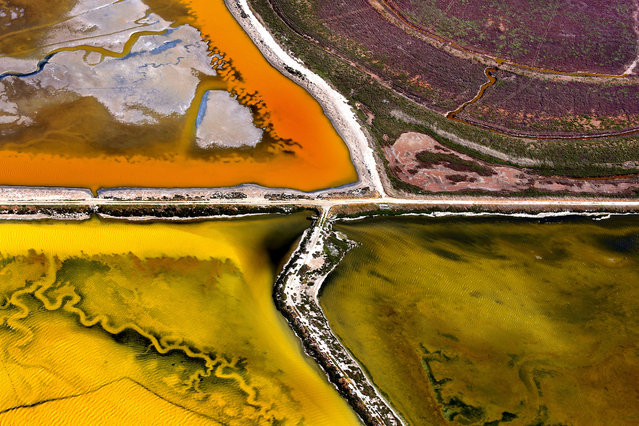 San Francisco Bay Salt Marshes shot from the air. (Photo by Jassen Todorov/Caters News)