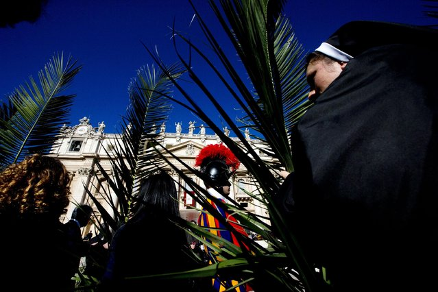 Faithful hold palm tree branches as they attend a Palm Sunday Mass celebrated by Pope Francis, in St. Peter's Square, at the Vatican,  Sunday, March 29, 2015. (Photo by Andrew Medichini/AP Photo)