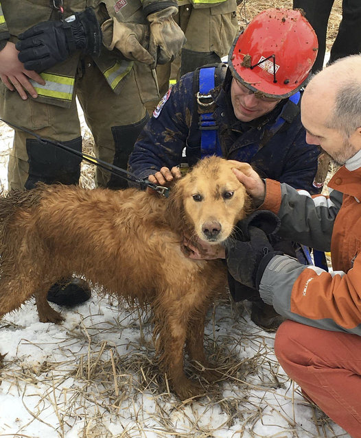 In this photo provided by Ryan McCaughey, rescue workers check Skye, a golden retriever, after being rescued in State College, Pa., Wednesday, February 17, 2016. The dog that spent two nights stuck in a 14-foot-deep sinkhole was rescued Wednesday by firefighters using a makeshift harness. (Photo by Ryan McCaughey via AP Photo)