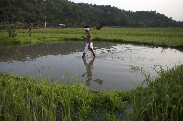 Indian farmer Moneswar Kathar walks after irrigating his paddy field at Khetri village about 40 kilometers (25 miles) east of Gauhati, India, Wednesday, April 22, 2015. Indian farmers are protesting against a government plan to ease rules for obtaining land for industry and development projects. (Photo by Anupam Nath/AP Photo)