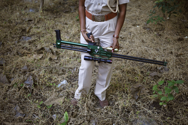 A female forest guard carries a tranquillizer gun in the Gir National Park and Wildlife Sanctuary in Sasan, Gujarat, December 2, 2014. (Photo by Anindito Mukherjee/Reuters)