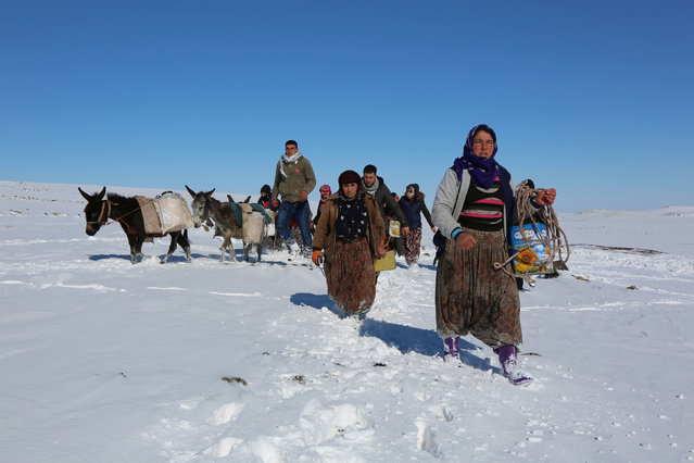 Women carry water on donkeys after they draw it from a well 2 kilometres away from their village, which has no access to fresh water, in Siverek, a town in Sanliurfa province, Turkey February 2, 2017. (Photo by Sertac Kayar/Reuters)