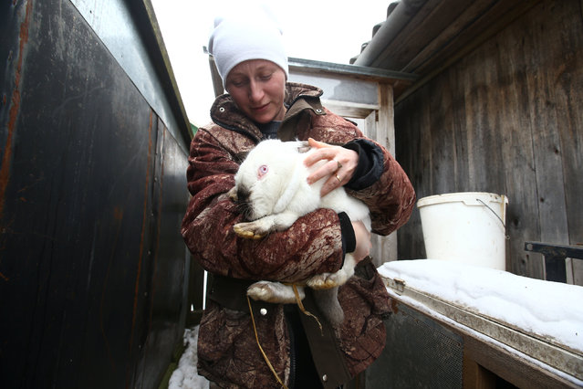 Nina Skidan, wife of a hunter Vladimir Krivenchik, holds a rabbit at her house in the village of Khrapkovo, Belarus February 1, 2017. (Photo by Vasily Fedosenko/Reuters).