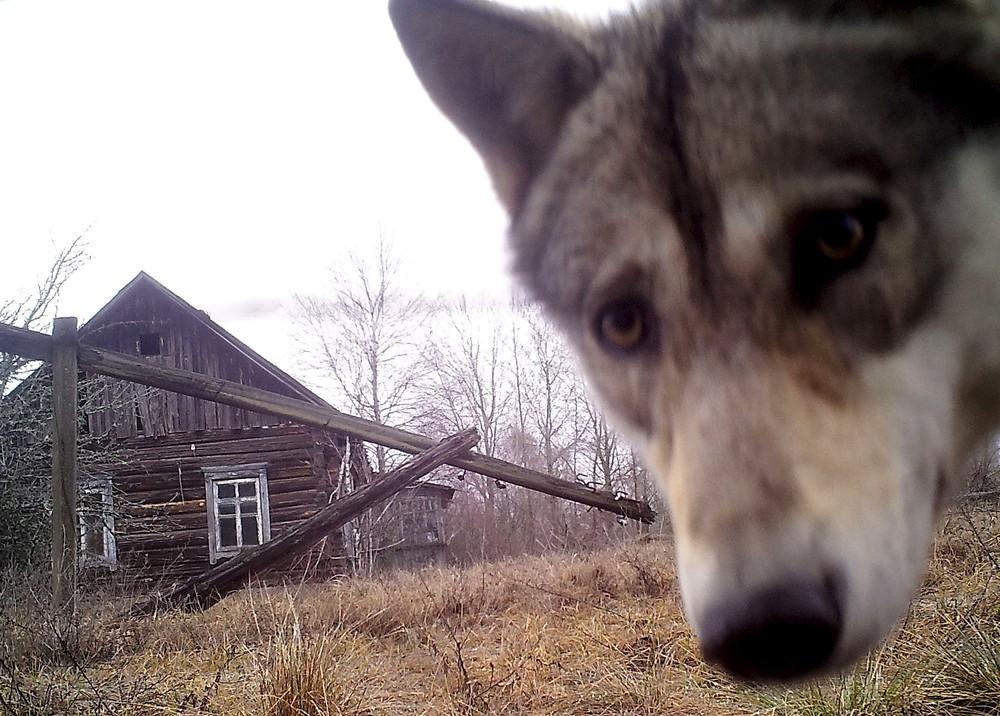 Wild Chernobyl