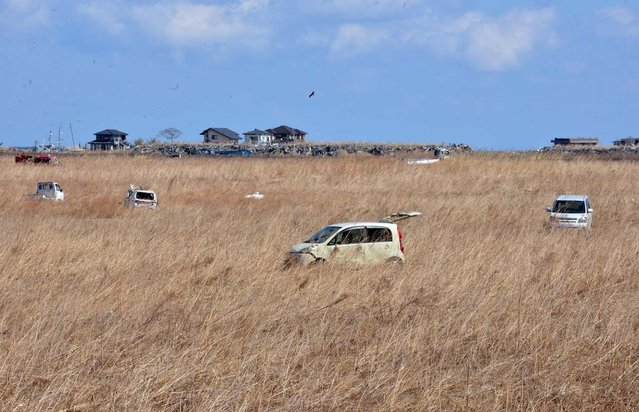 Wrecked vehicles remain in a field of reeds in Namie, two years after the March 11, 2011 tsunami and earthquake, near the striken TEPCO's Fukushima Dai-ichi nuclear plant in Fukushima prefecture on March 11, 2013. March 11, 2013 marks the second anniversary of the 9.0 magnitude earthquake that sent a huge wall of water into the coast of the Tohoku region, splintering whole communities, ruining swathes of prime farmland and killing nearly 19,000 people. (Photo by Yoshikazu Tsuno/AFP Photo)