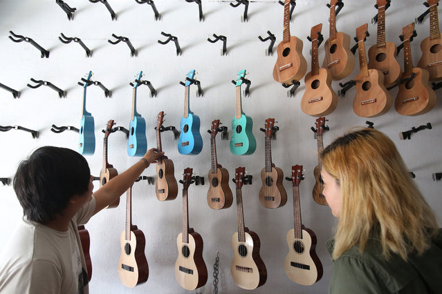 One of the shop owners Anjo Joaquin picks up a ukelele to be shown to a customer in suburban Quezon city, north of Manila, Philippines on Wednesday, April 27, 2016. The handmade ukelele's from Cebu and Pampanga province are being sold for P1,500 to P7,500 (about US$ 32 to $160). (Photo by Aaron Favila/AP Photo)