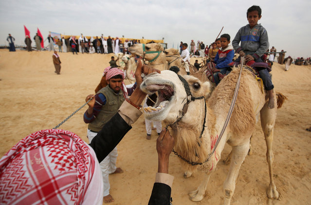 Race coordinators examine the camels of jockeys, most of whom are children, at the starting line during the opening of the International Camel Racing festival at the Sarabium desert in Ismailia, Egypt, March 21, 2017. (Photo by Amr Abdallah Dalsh/Reuters)