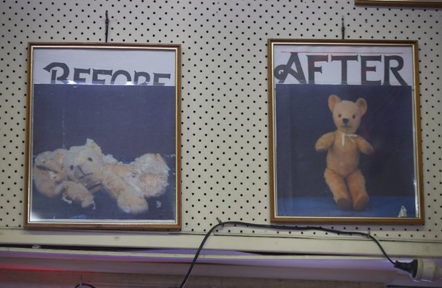 Two photographs hanging on the wall of Sydney's Doll Hospital show the before and after pictures of a teddy bear that had been brought in for repair, June 17, 2014. (Photo by Jason Reed/Reuters)