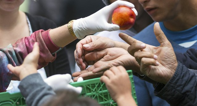 Helpers distribute fruit to migrants in front of the State Office for Health and Social Affairs (LaGeSo), in Berlin, Germany, September 3, 2015. (Photo by Hannibal Hanschke/Reuters)