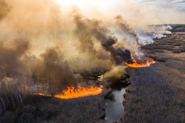 This picture taken on April 10, 2020, shows a field fire burning at a 30-kilometer (19-mile) Chernobyl exclusion zone, not far from the nuclear power plant. (Photo by Volodymyr Shuvayev/AFP Photo)