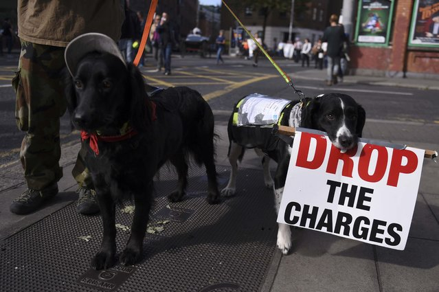 Dogs join a march protesting against household water charges, as demonstrators urge the Irish Government to accept the European Commission's Apple tax ruling of 13 billion euros ($14.6 billion) in back taxes, in Dublin, Ireland September 17, 2016. (Photo by Clodagh Kilcoyne/Reuters)
