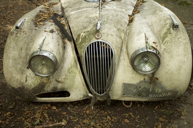 The front of the rotting Jaguar XK120 made in the year 1950 and worth 150,000 euros in Neandertal Germany, September 11, 2016. (Photo by Christoph Hagen/Barcroft Images)