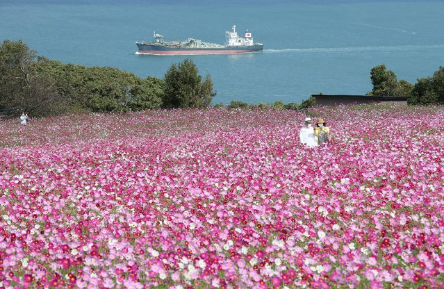 A couple take a selfie at Nokonoshima Island Park on Nokonoshima Island, in Hakata Bay, Fukuoka prefecture on October 15, 2020, as the early-blooming cosmos were in full bloom in the park's 10,000-square-foot slope covered in pink and purple. (Photo by JIJI Press/AFP Photo)