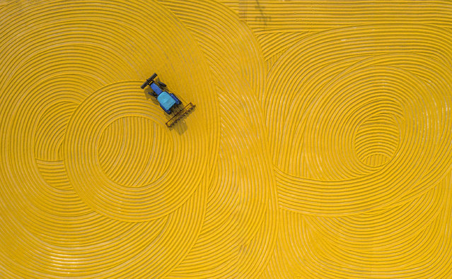 A tractor turns rice in the sun yard, and the rake marks drawn by the tractor are very beautiful. Suqian City, Jiangsu Province, China, October 19, 2020. In Hongzehu farm, 50000 mu of rice was harvested in succession. (Photo by Costfoto/Barcroft Media via Getty Images)