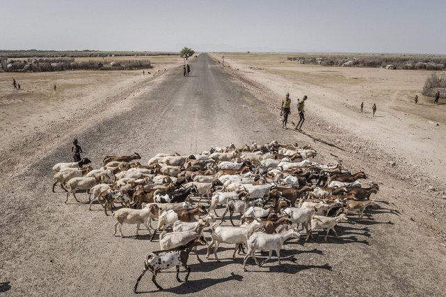 Goat herders in Ethiopia's Omo Valley, a region under severe environmental and socio-economic strain. (Photo by Faustro Podavini)